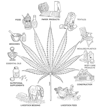 الیاف کنف - مواد اولیه نساجی, انواع الیاف, الیاف گیاهی, الیاف طبیعی, الیاف سلولوزی